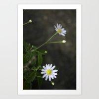 A tiny daisy  Art Print
