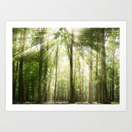 Sun Rays Through Forest Treetops Nature / Botanical Landscape Photograph Art Print