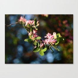 Pink flower macro 01 Canvas Print