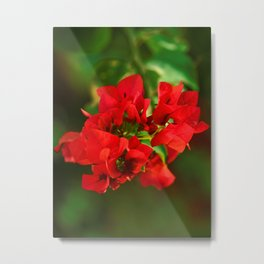 Floral collection. Cyprus Metal Print