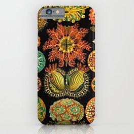 Ernst Haeckel Kunstformen der Natur Ascidian (Ascidiae) iPhone Case