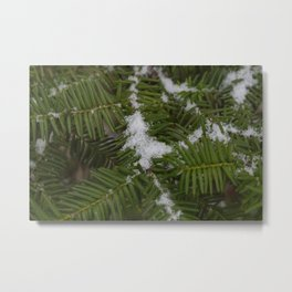 Snow and Evergreen Metal Print