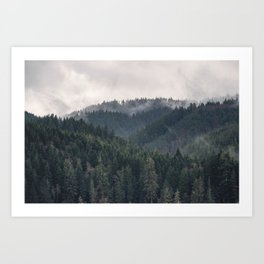 Pacific Northwest Forest - Nature Photography Art Print