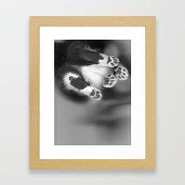 Cat Scan III Framed Art Print