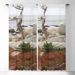 Dead Cypress At Pebble Beach Blackout Curtain