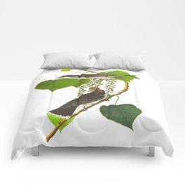 Tyrant Fly-catcher Bird Comforters