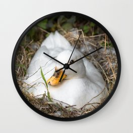 White Call Duck Sitting on Eggs in Her Nest Wall Clock