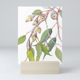 Australian eucalyptus tree branch Mini Art Print