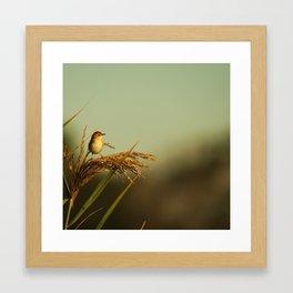 A Small Bird Framed Art Print