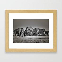 Elephant Herd Circling IV Framed Art Print