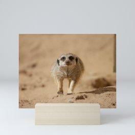Little cheeky meerkat Mini Art Print