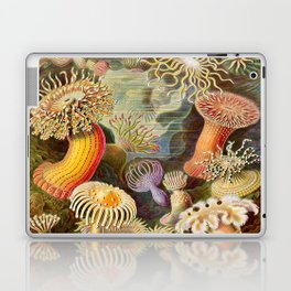 Haeckel Illustration - Marine Life Laptop & iPad Skin