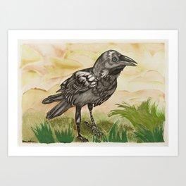 Young blue eyed raven Art Print