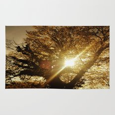Sunset Behind the Tree Rug