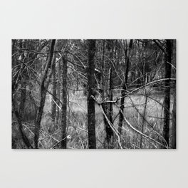 Forrest Canvas Print