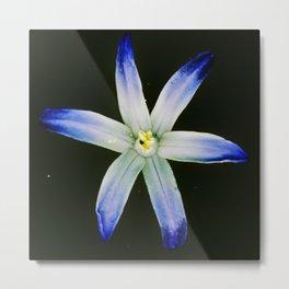Glorious blue Metal Print