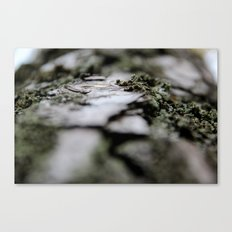 with a tree Canvas Print
