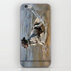 Springer Spaniel iPhone & iPod Skin