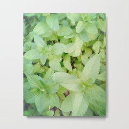 Minty Planter Metal Print