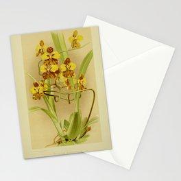 Flower oncidium macranthum29 Stationery Cards