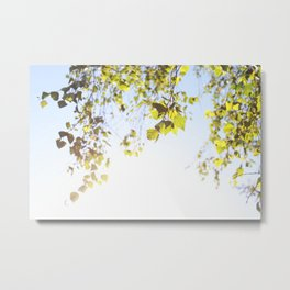 Hanging Branches Metal Print