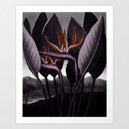 Birds of Paradise : Temple of Flora Dark Art Print