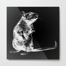 Rat | Spirit animal | Year of the rat | The plague | Wicca Metal Print