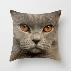 Diesel, the cat - (close up)  Throw Pillow