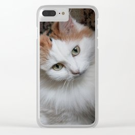 Fluffy white-haired cat. Portrait Clear iPhone Case