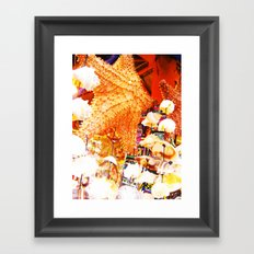 Sea Shells Print Framed Art Print