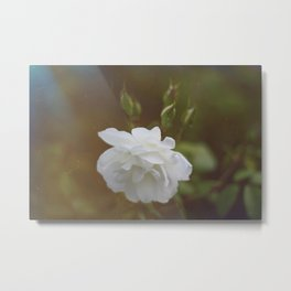 la belle rose Metal Print