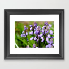 Spring purple Framed Art Print