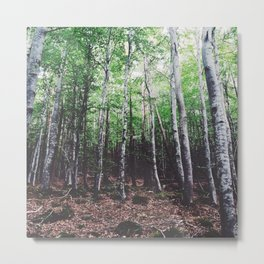 Uncharted Woods  Metal Print