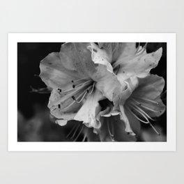 Timeless Black & White  Art Print