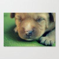 puppy Canvas Prints featuring Puppy by Luiza Lazar