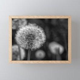 Monochromatic dandelion on black Framed Mini Art Print