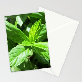 Fresh green peppermint Stationery Cards
