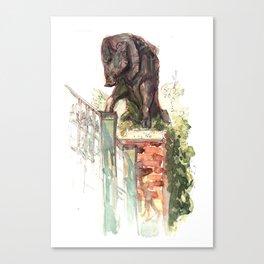 Boar Canvas Print