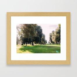 Kew Gardens London Tree Lane Framed Art Print