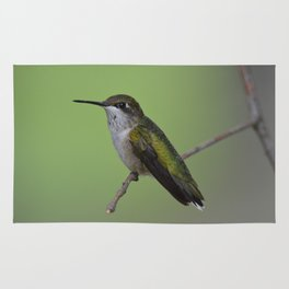 Ruby Throated Humming Bird At Rest Rug