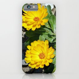 Two Marigolds iPhone Case