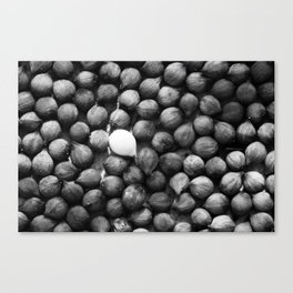 There can be only One Canvas Print