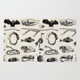 Various Animal Skeletons Rug