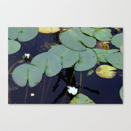 vaster surface Canvas Print