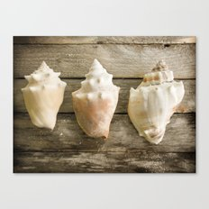 Conch Shells Canvas Print