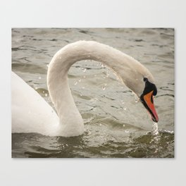 Dripping Swan Canvas Print