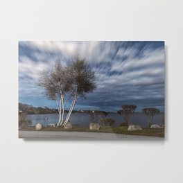 Birch tree by the pond Metal Print