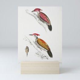 1 Crimson Woodpecker (Picus mineatus) 2 Indian three-toed Woodpecker (Picus Tiga) 3 A head of Female Mini Art Print