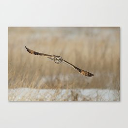 I am coming - Short Eared Owl Canvas Print