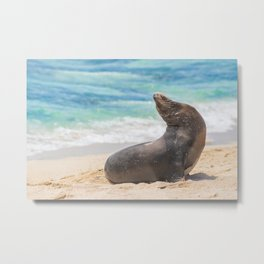 Sea lion sunbathing on beach Metal Print